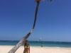 Belén Esteban vacaciones en Punta Cana en Semana Santa: palmera
