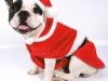Disfraz de Papá Noel: Para perro