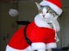 Disfraz de Papá Noel: Para gatos