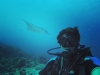 Eva González y Cayetano Rivera luna de miel: el torero haciendo submarinismo