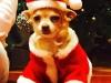 La Navidad llega a casa de los famosos: David Bustamante y su perro