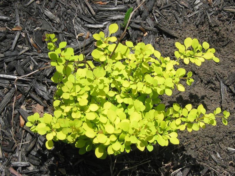Plantas de invierno para exterior las que m s aguantan el for Plantas de invierno exterior