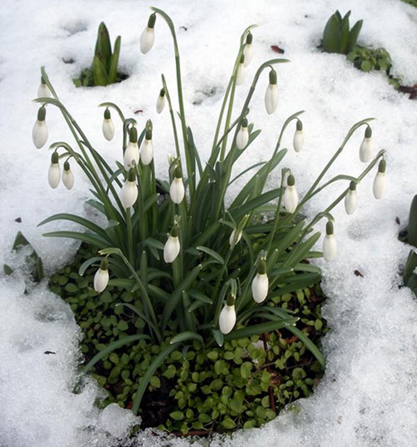 Plantas de invierno para exterior las que m s aguantan el fr o - Plantas de exterior resistentes al frio y calor ...