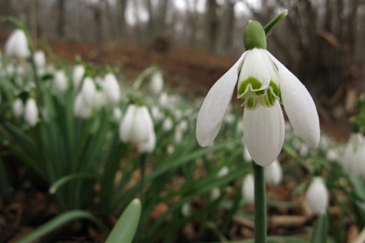 Plantas de invierno para exterior las que m s aguantan el fr o - Plantas de invierno ...