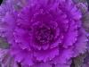 Plantas de invierno para exterior: colornamental