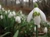 Plantas de invierno para exterior: Las mejores
