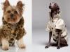 Ropa para perros: Abrigos y gabardinas