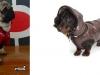 Ropa para tu perro: Chubasqueros