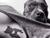 Tatuajes mascotas: perro silueta negra