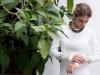 Vestidos de novia Analilen 2016: detalle brocados