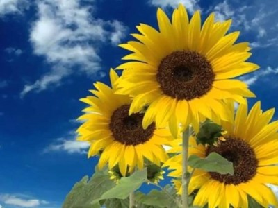Qué flores regalar a un chico: Sedúcele de una forma diferente