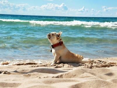 Playas para perros en España: Disfruta con tu mascota