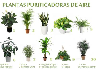 Plantas purificadoras de aire para interior