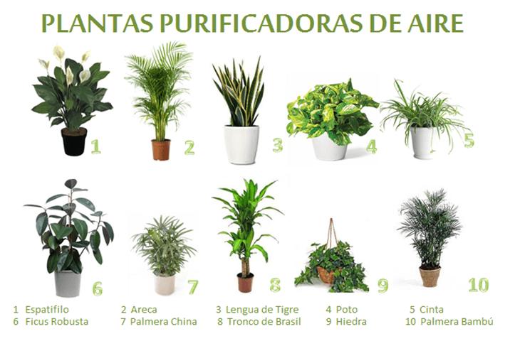Plantas purificadoras de aire para interior cu les son for 5 nombres de plantas ornamentales