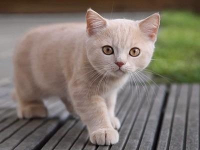 Cuidados básicos de un gato