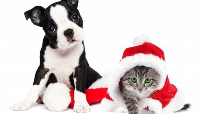 5 consejos clave para el cuidado de nuestras mascotas en Navidad
