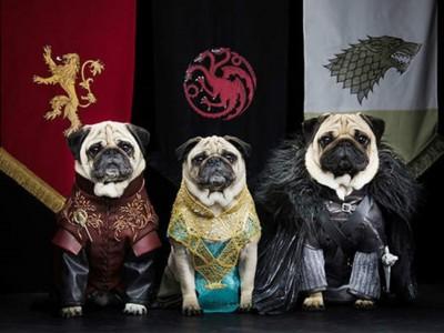 Los 5 disfraces más punteros para tu perro este Carnaval