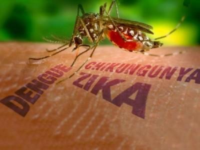 Virus Zika: Síntomas y riesgos según la OMS