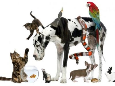 Mascota según tu personalidad: ¿Cuál es la ideal para ti?