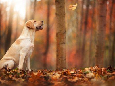 Cuidados de los perros en otoño: Uno a uno