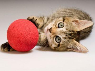 Juguetes para gatos baratos: Estimula a tu mascota