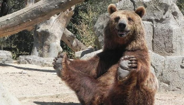 Los 5 zoos de España que no puedes dejar de visitar