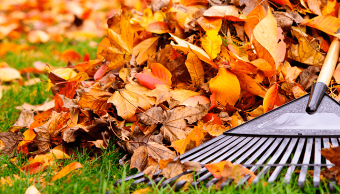 5 tareas que realizar en el jardín cuando llega el otoño