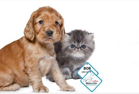 Viajar con mascotas: Ahora más fácil que nunca